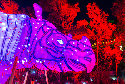 Sydney event photography of animal illuminations at Taronga Zoo during the Vivid Light Festival taken by event photographer Kevin Chamberlain